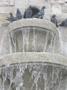 Güvercin Kondu Yüreğime