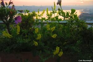 Yükseklere Kaçan Çiçekler